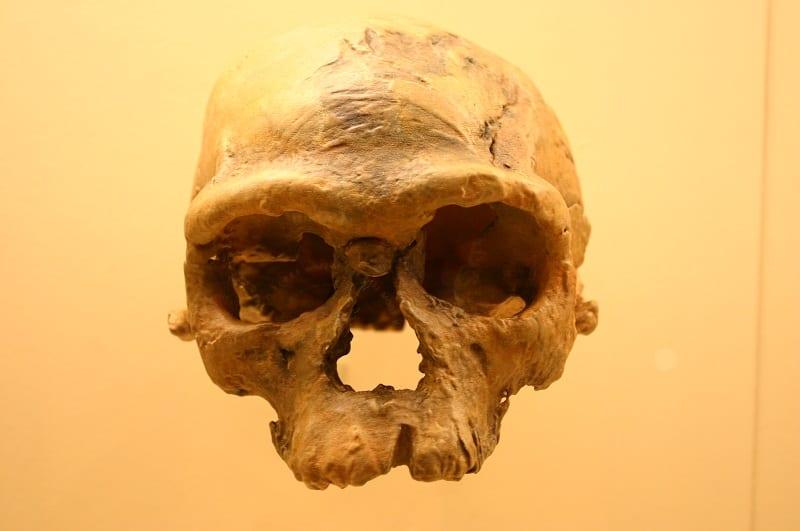 Oldest Bones | Time
